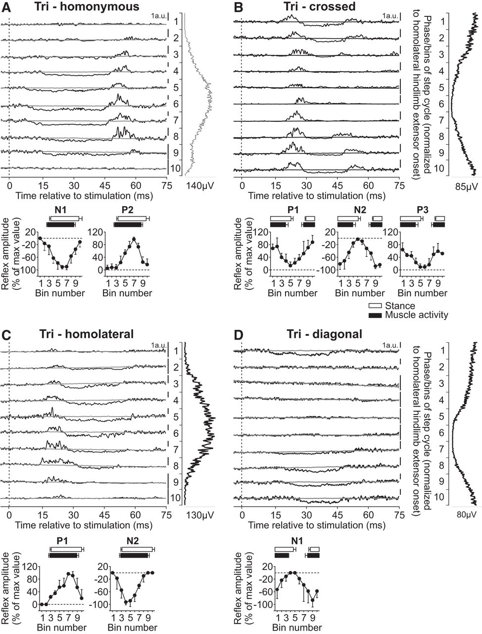 Intralimb and Interlimb Cutaneous Reflexes during Locomotion
