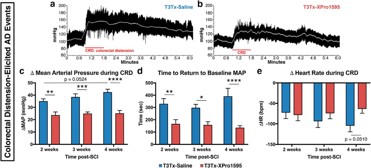 Soluble TNFα Signaling within the Spinal Cord Contributes to