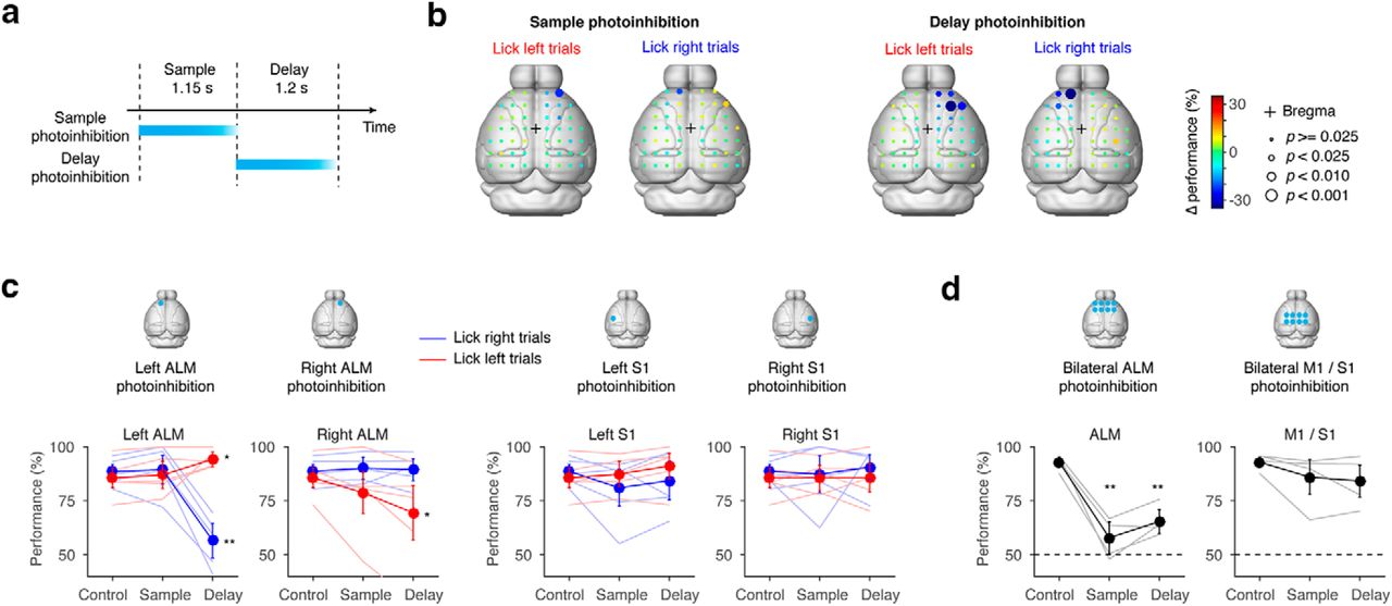 Low-Dimensional and Monotonic Preparatory Activity in Mouse