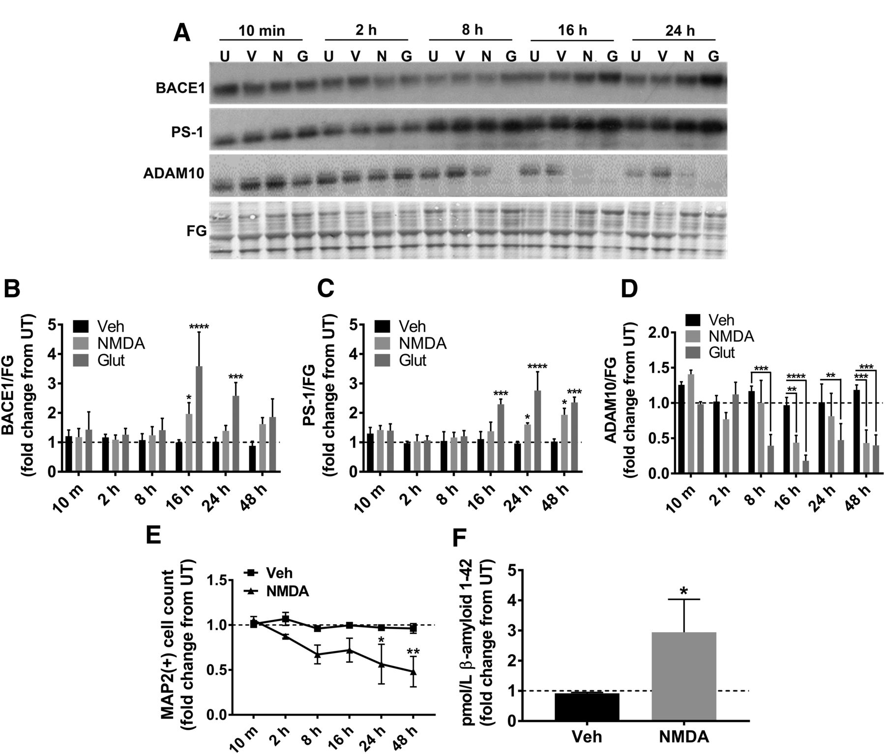 BACE1 Mediates HIV-Associated and Excitotoxic Neuronal
