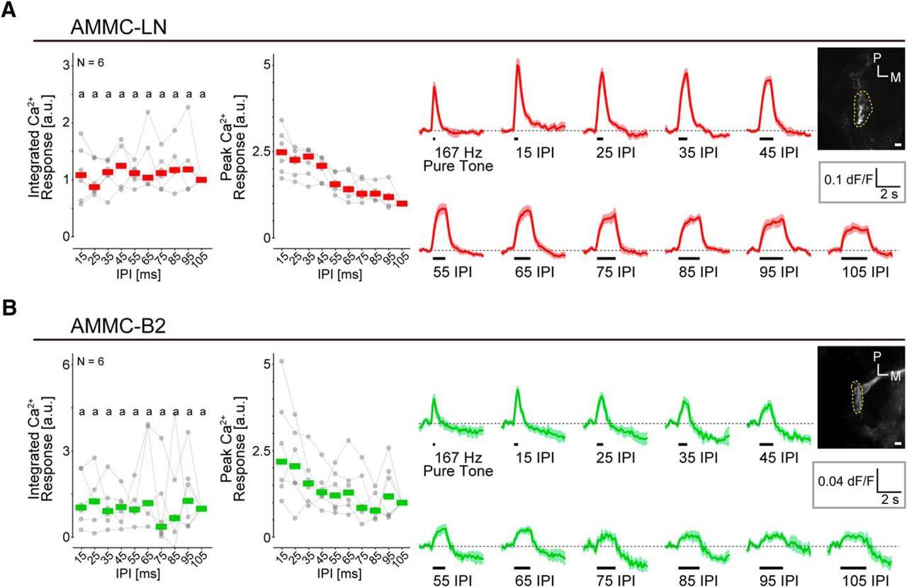 Gabaergic Local Interneurons Shape Female Fruit Fly Response To