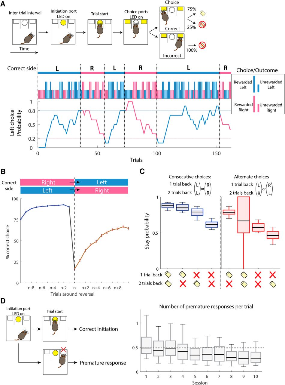 Cell-Type-Specific Contributions of Medial Prefrontal