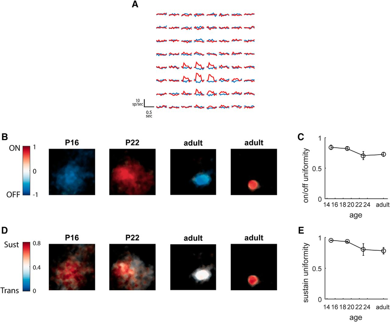 Refinement of Spatial Receptive Fields in the Developing
