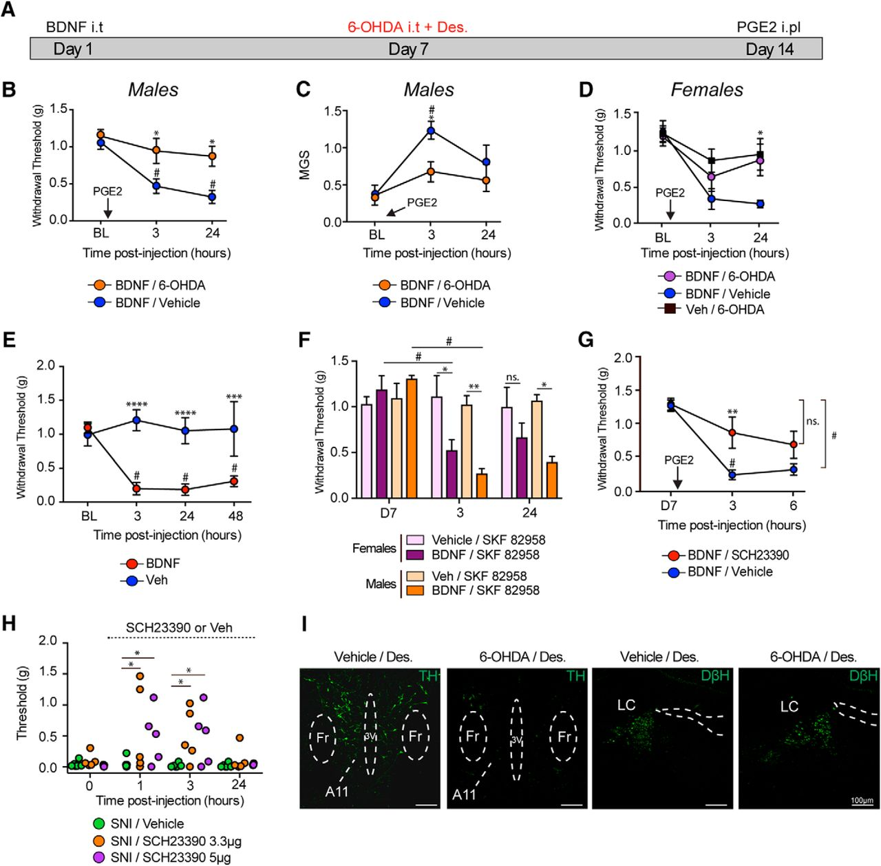 A Critical Role for Dopamine D5 Receptors in Pain Chronicity