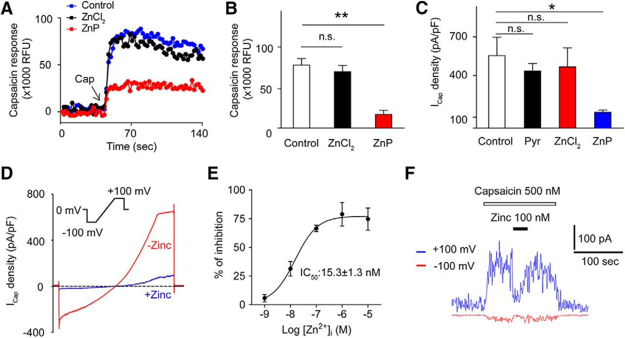 Zinc Inhibits TRPV1 to Alleviate Chemotherapy-Induced