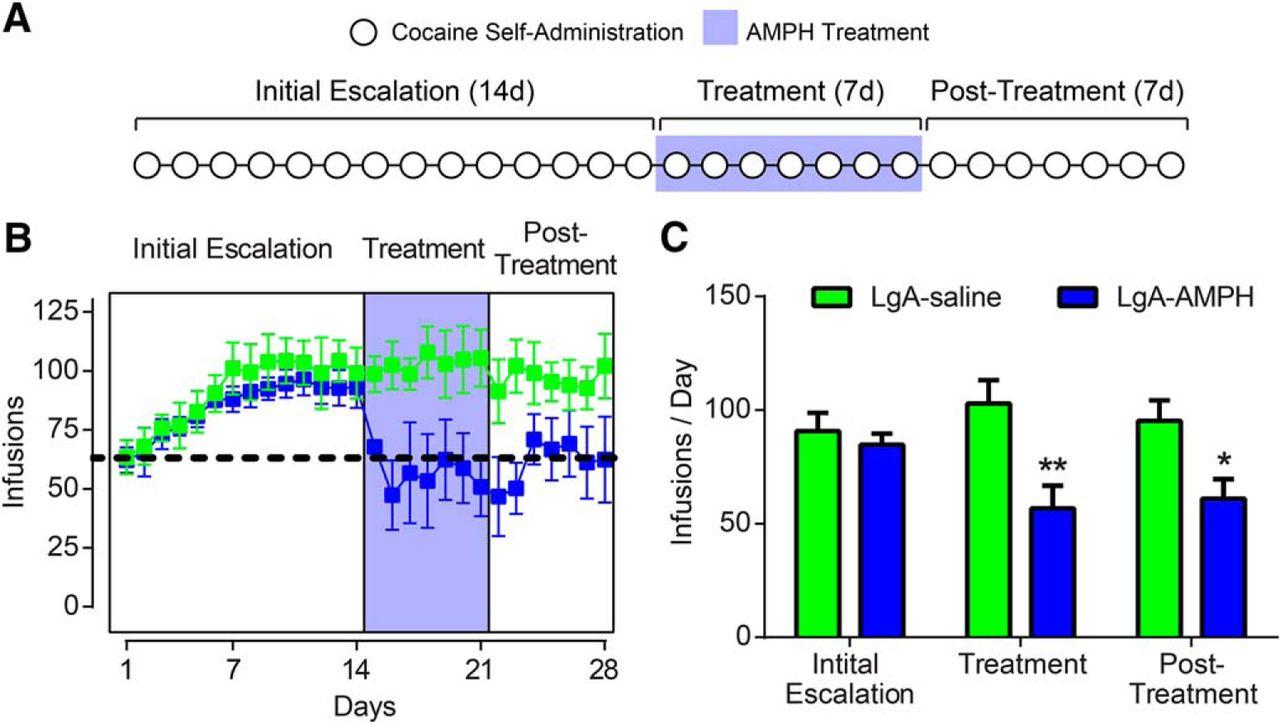 Amphetamine Reverses Escalated Cocaine Intake via