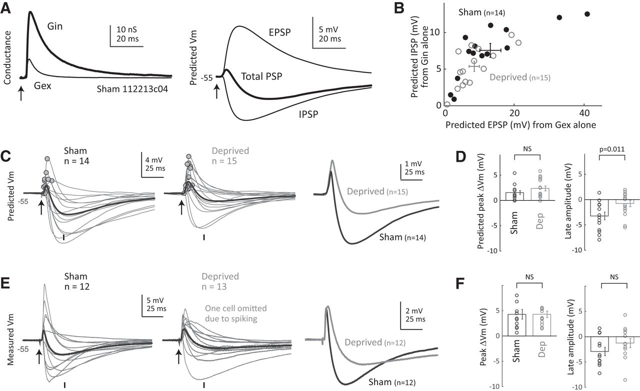 Rapid Disinhibition By Adjustment Of Pv Intrinsic Excitability