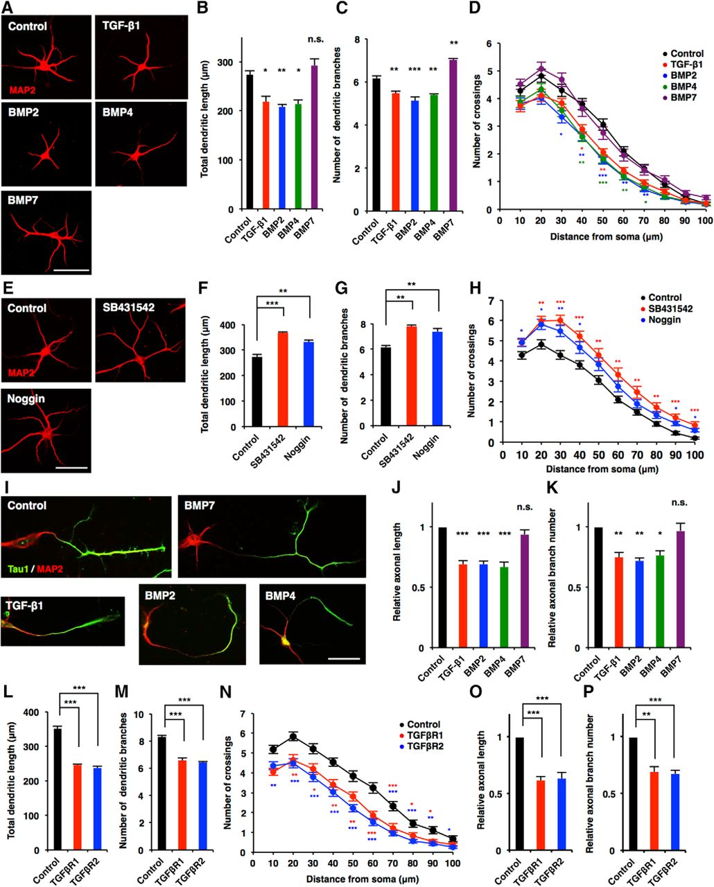 Canonical Tgf Signaling Negatively Regulates Neuronal Suzuki Gn 125 Electric Circet Pdf Download Figure