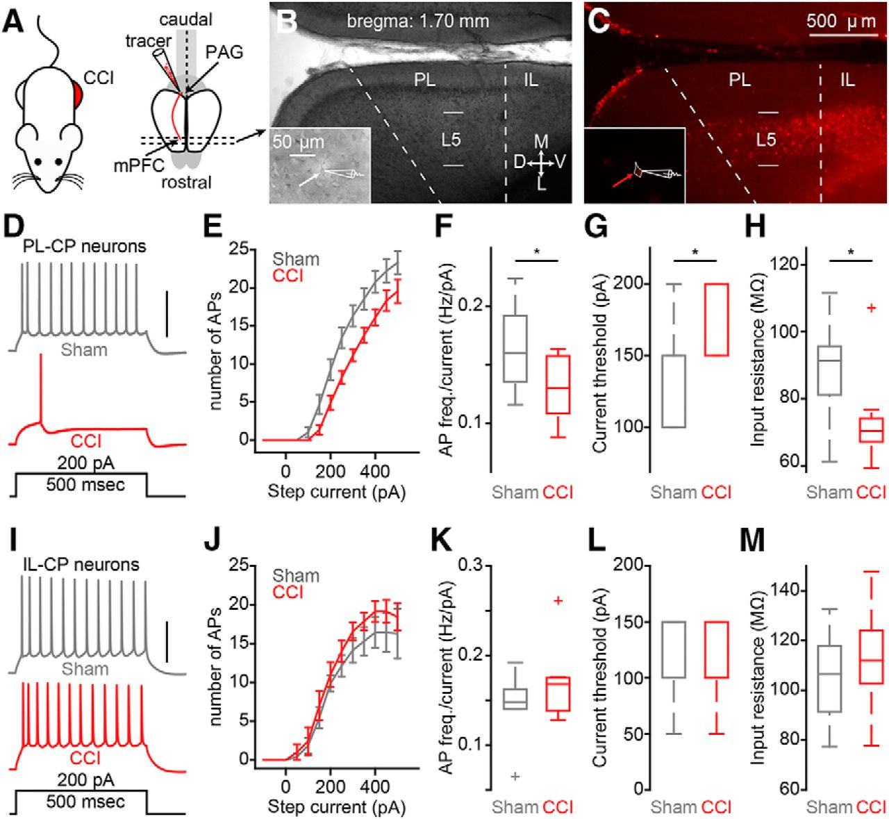 Altered Excitability And Local Connectivity Of Mpfc Pag Neurons In A Keywords Like Schematic Symbol For Heater Panel Other People Download Figure