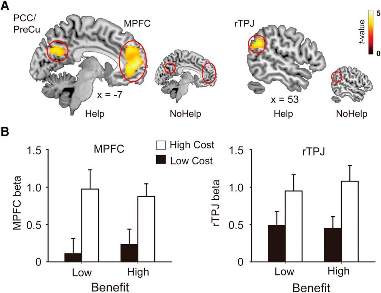 Brain Representations Of Social >> Decomposing Gratitude Representation And Integration Of Cognitive