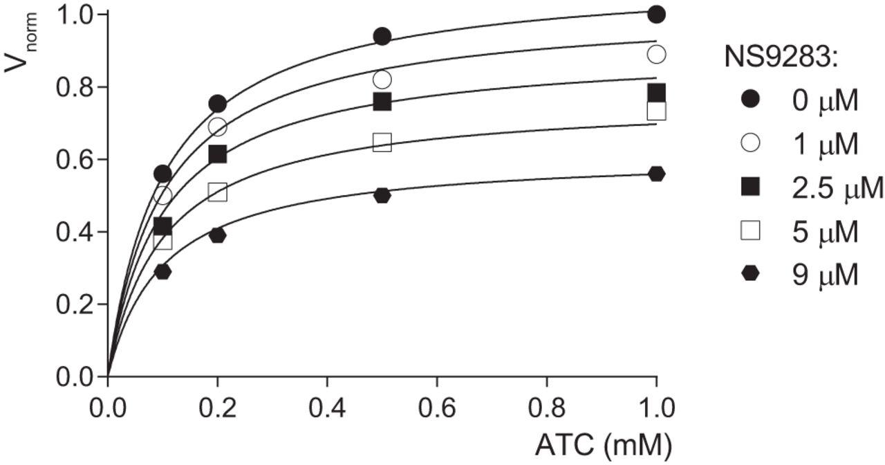 Stoichiometry of the Heteromeric Nicotinic Receptors of the Renshaw