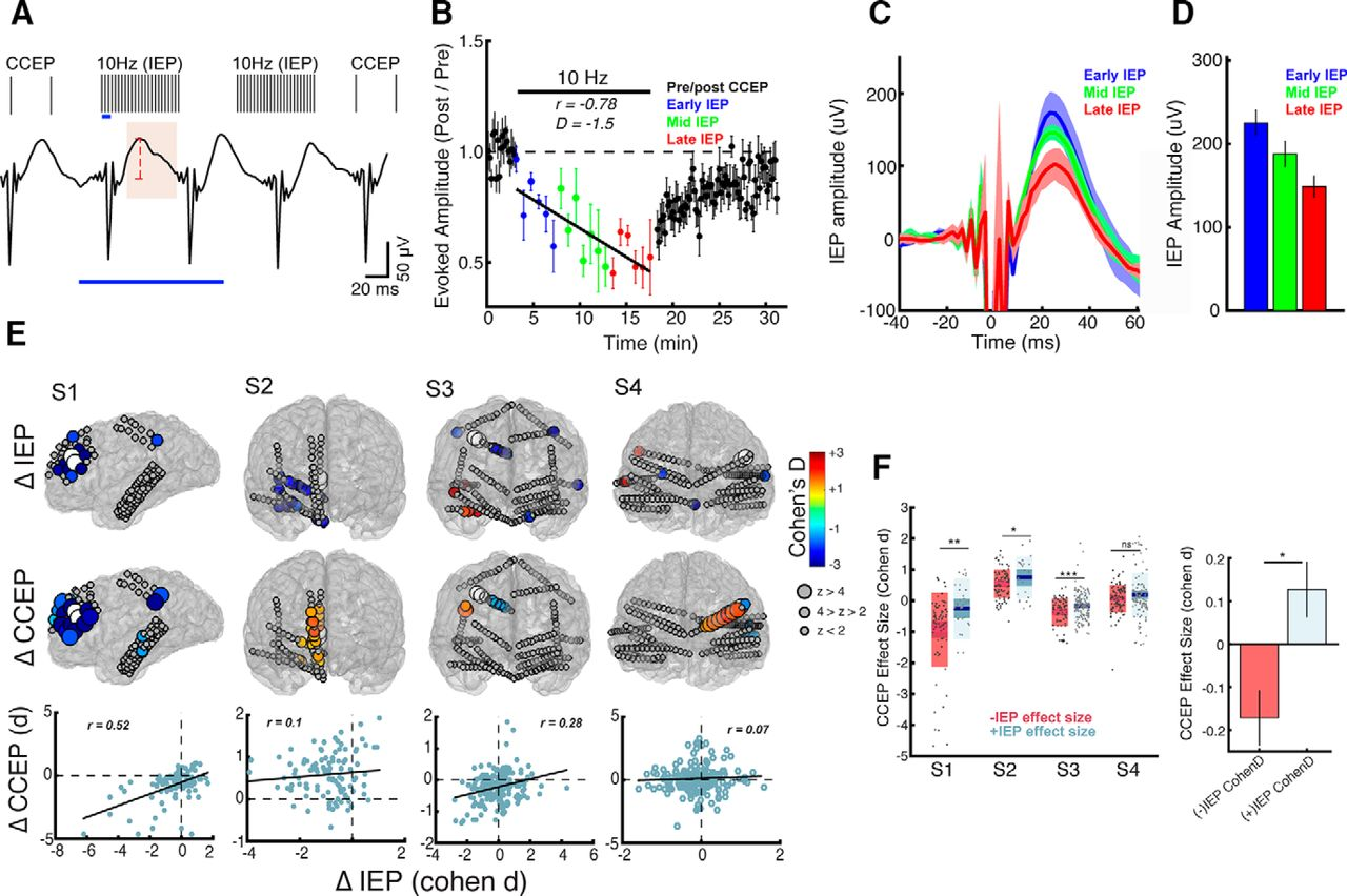 Induction And Quantification Of Excitability Changes In Human Free Download Inf4 Wiring Diagram Figure Open New Tab Powerpoint