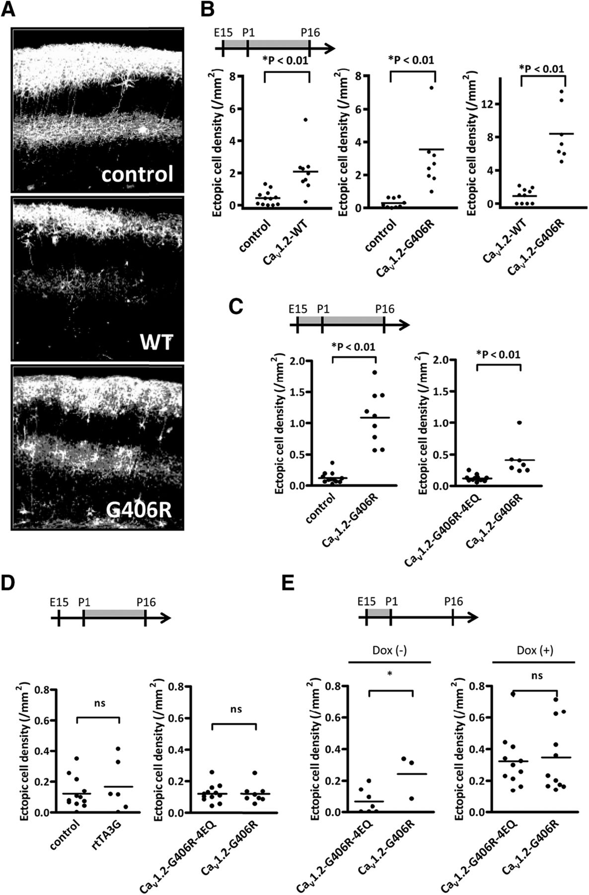 A Critical Neurodevelopmental Role For L Type Voltage Gated Calcium Three Way Switch Miswired Download Figure