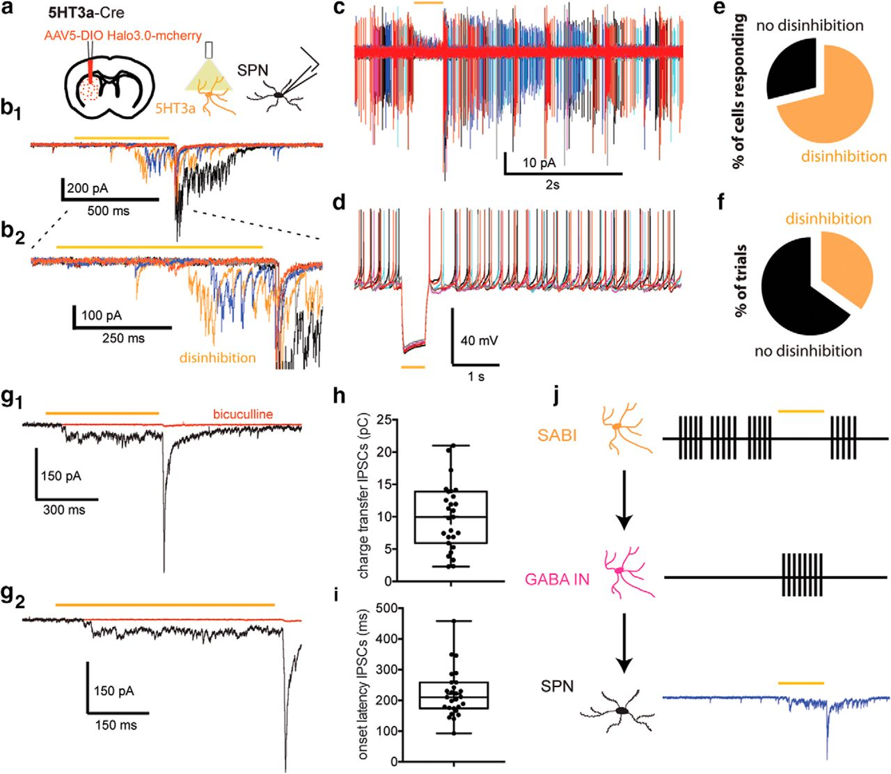 Identification and Characterization of a Novel Spontaneously