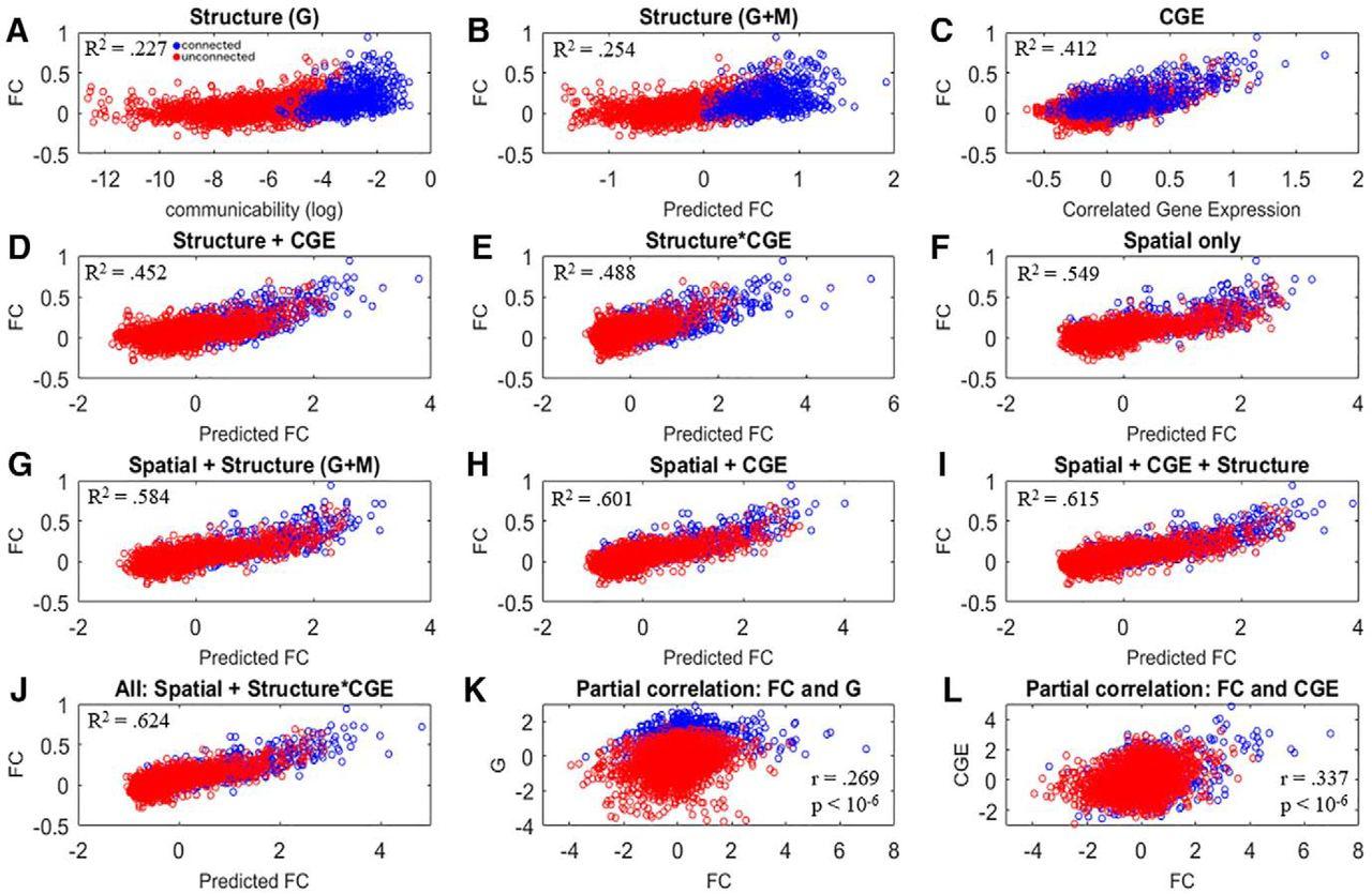 Correlated Gene Expression and Anatomical Communication