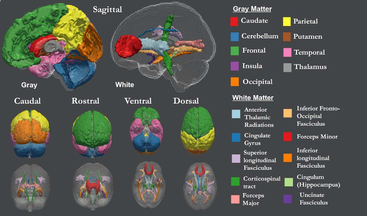 Age Differentiation within Gray Matter, White Matter, and