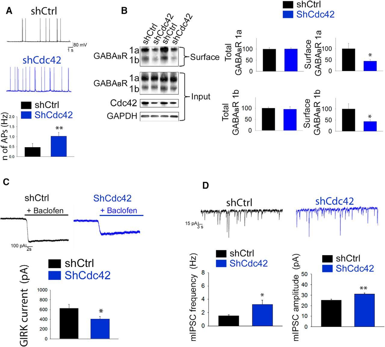 Activating Transcription Factor 4 (ATF4) Regulates Neuronal