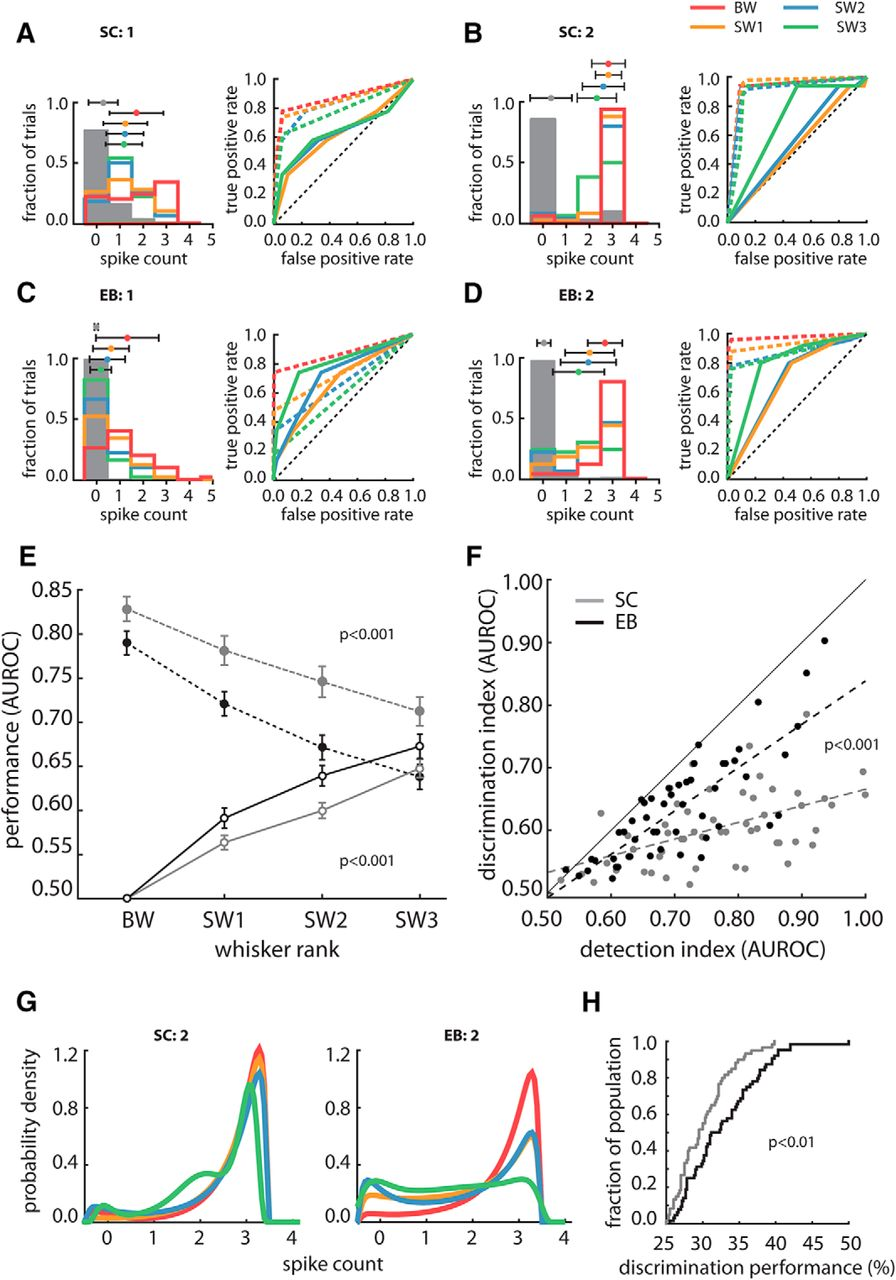 Neural Coding Of Whisker Mediated Touch In Primary Somatosensory Promotional Gold Detector Circuit Buy Promotion Download Figure