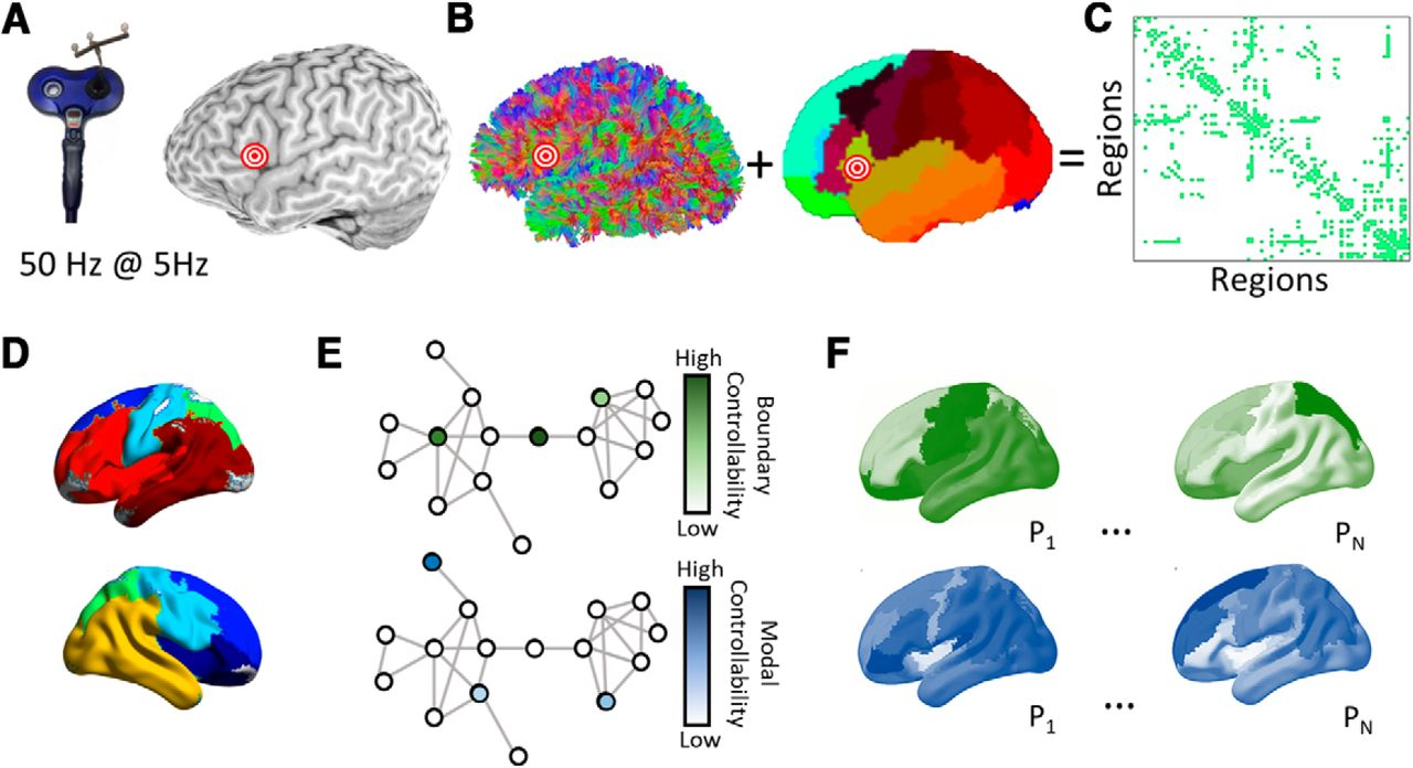 Network Controllability In The Inferior Frontal Gyrus Relates To