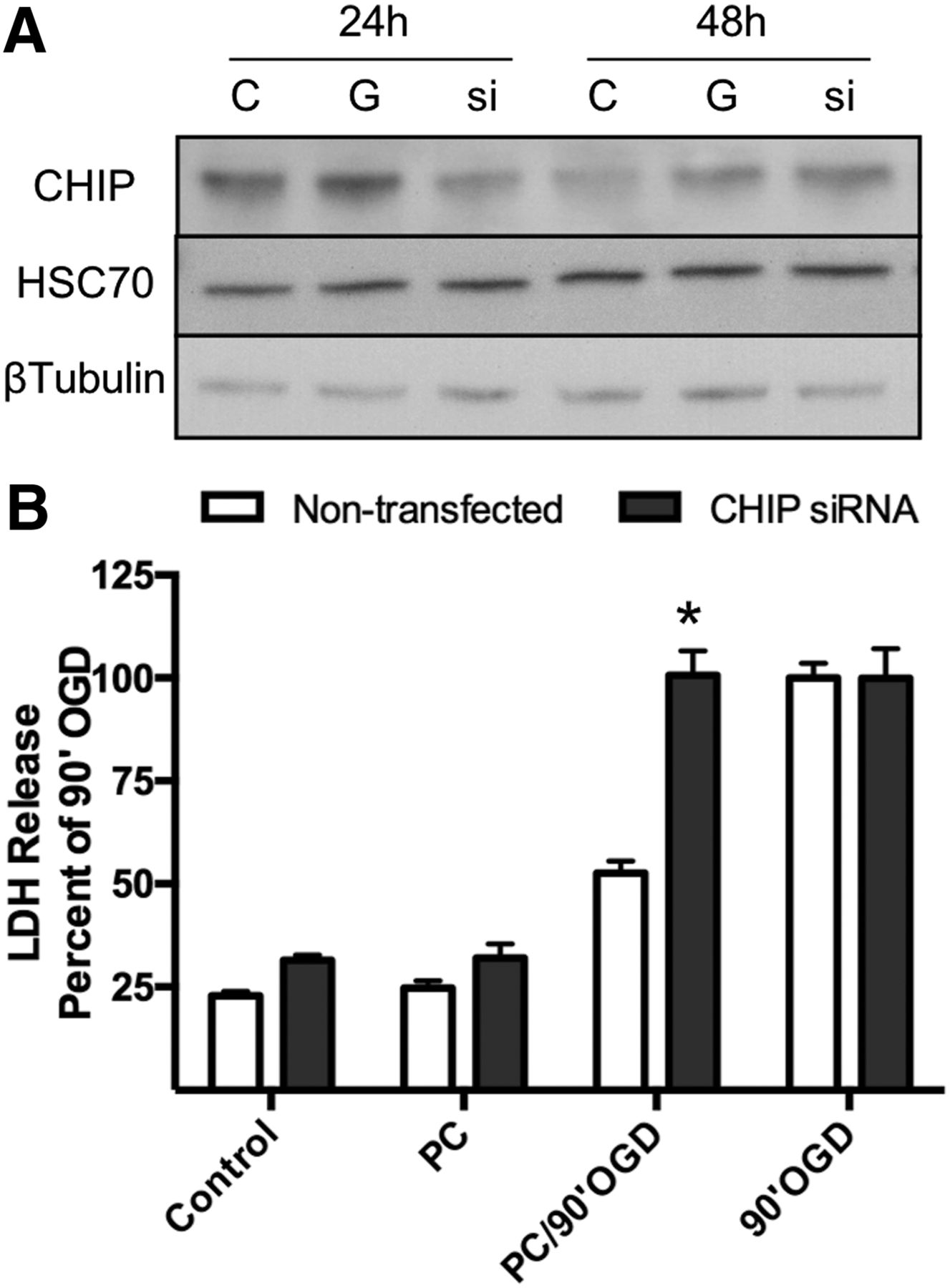 Neuronal Preconditioning Requires the Mitophagic Activity of