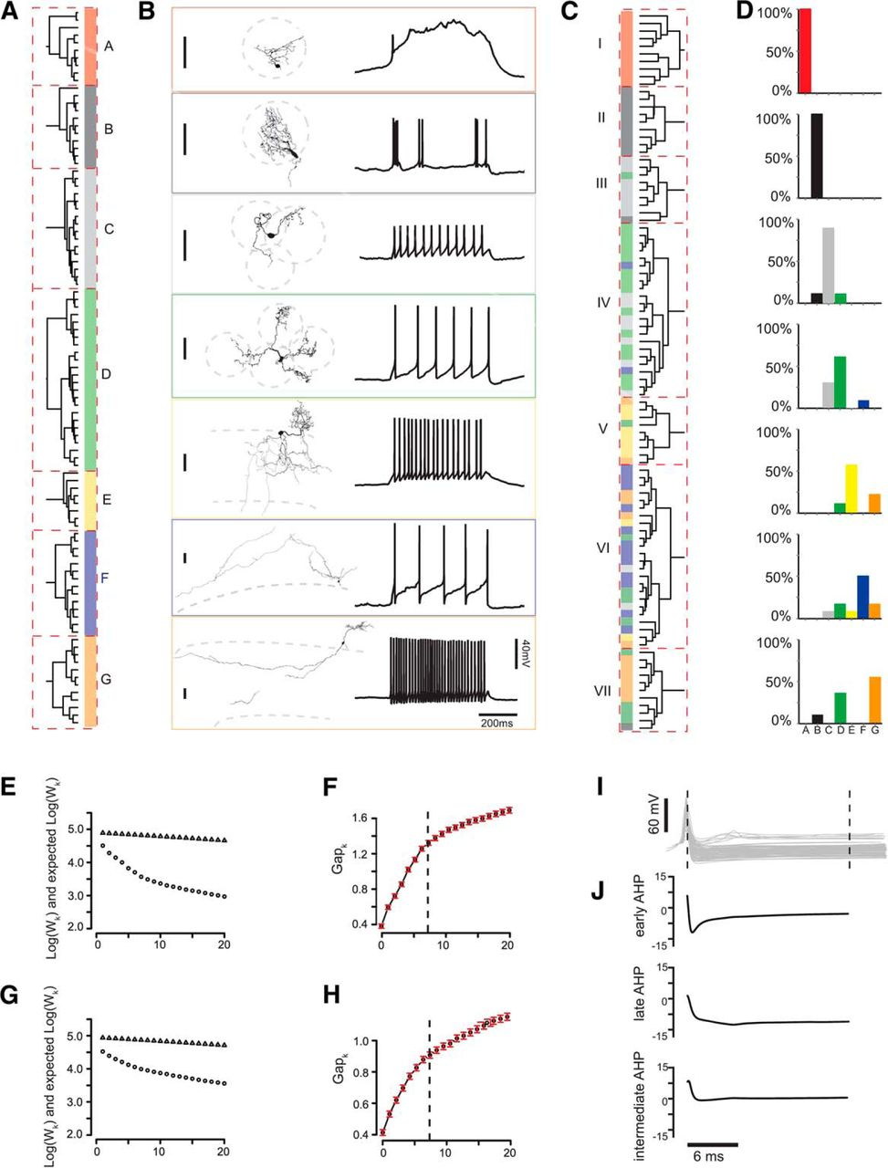 Quantitative Association Of Anatomical And Functional Classes Of