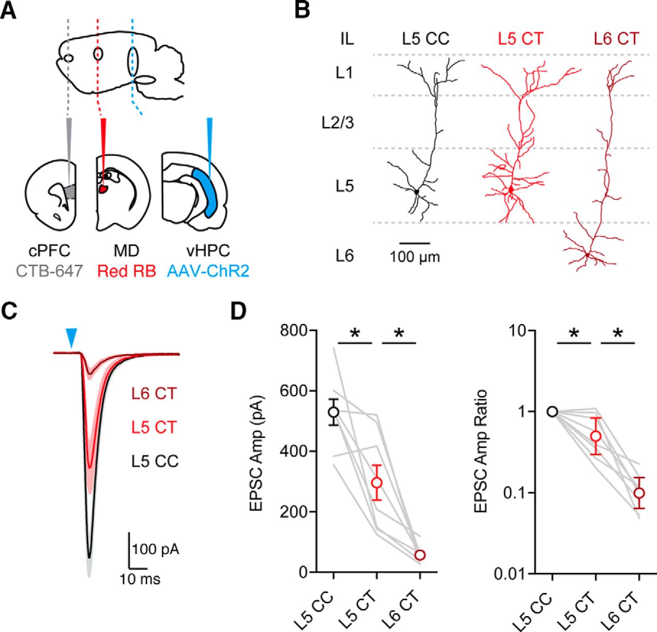 Ventral Hippocampal Inputs Preferentially Drive Corticocortical