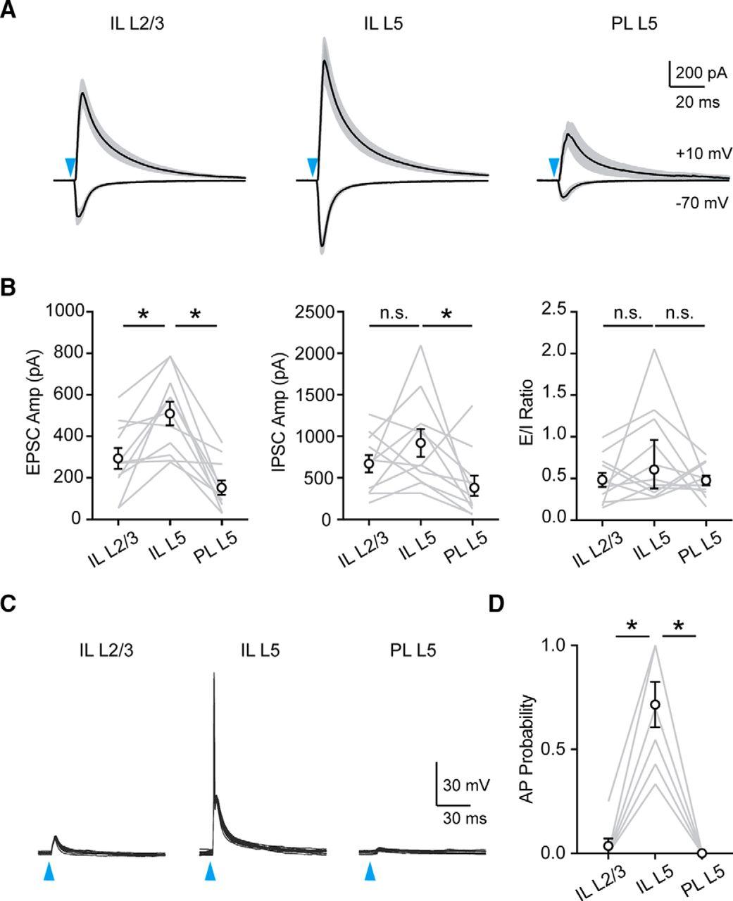 Ventral Hippocampal Inputs Preferentially Drive Corticocortical