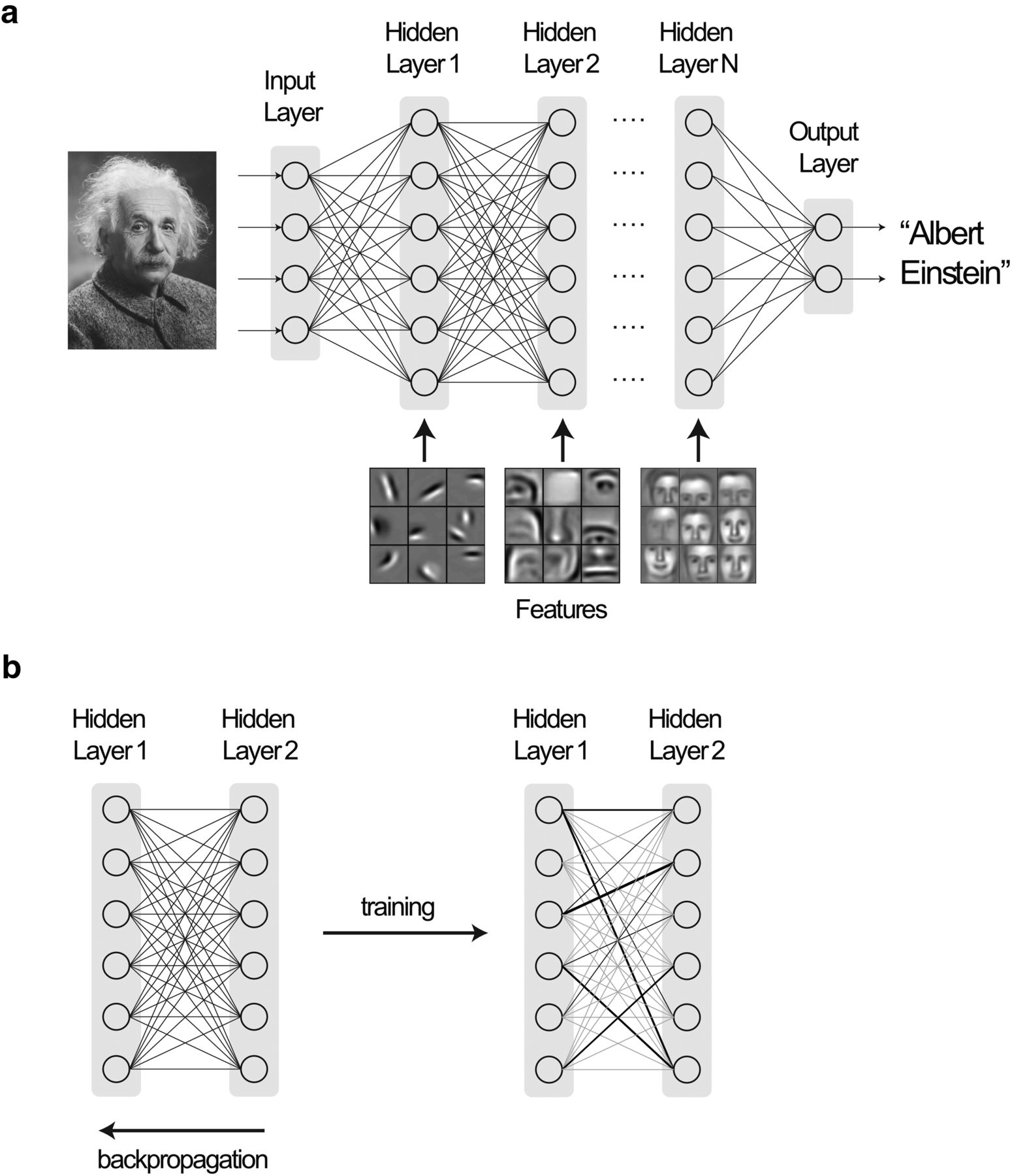 Deeper Learning Journal Of Neuroscience Electrical Engineering 4 Year Plan Uc Davis Download Figure