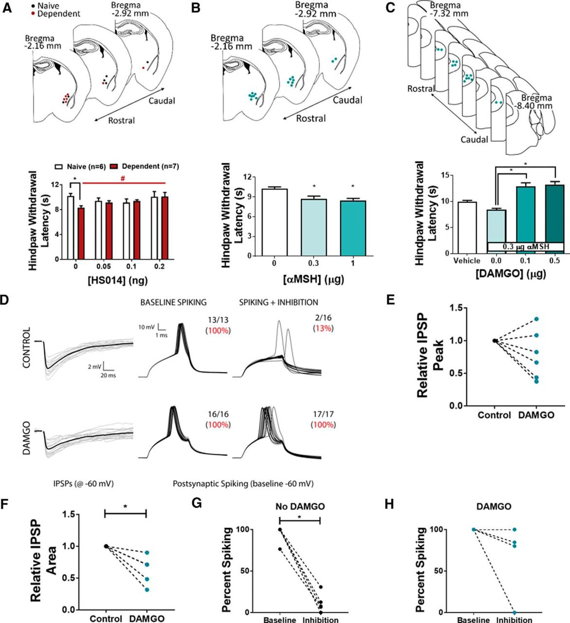 Central Amygdala Circuits Mediate Hyperalgesia In Alcohol Dependent Circuit Diagram Of Metal Source Abuse Report Download Figure