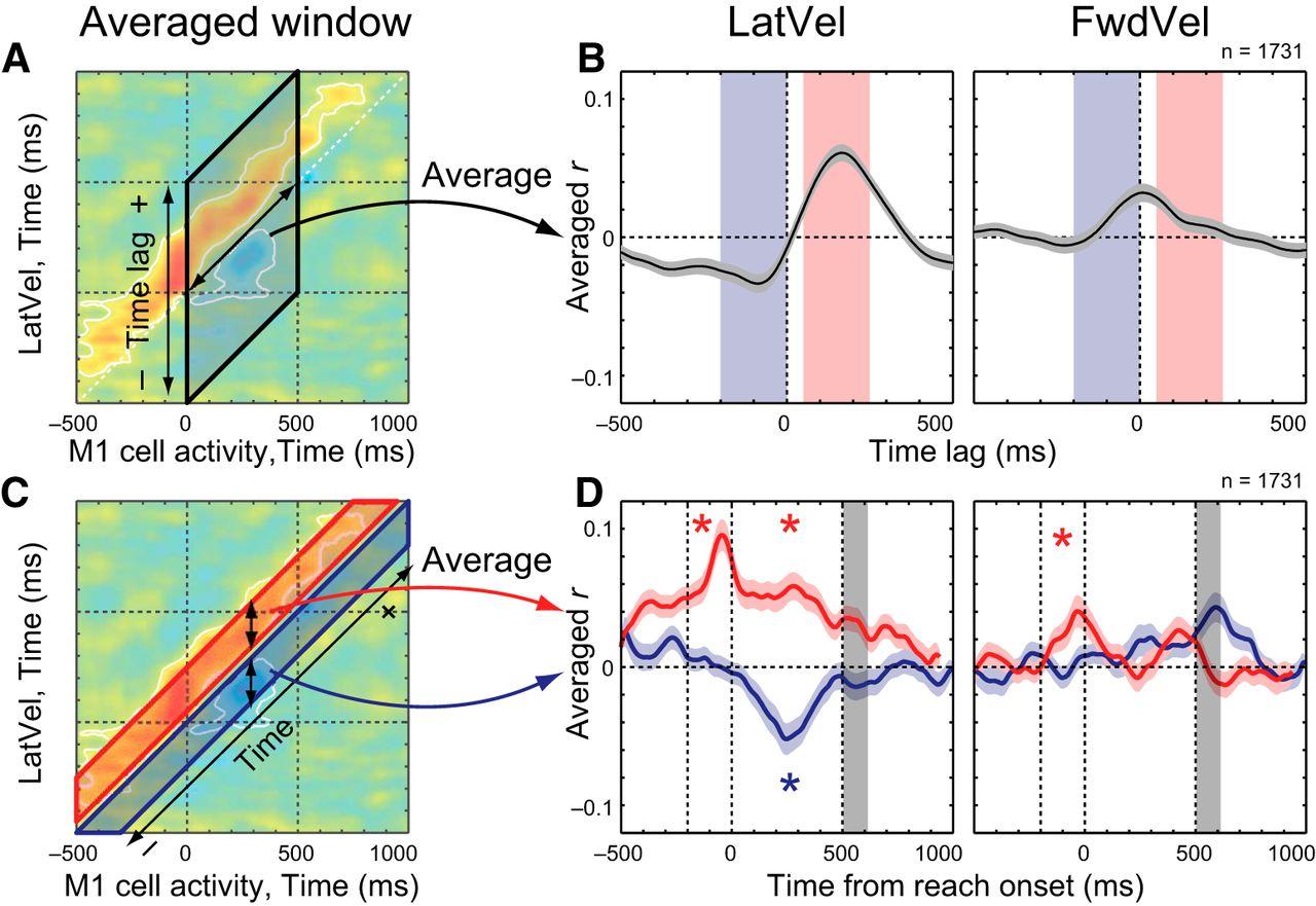 Correlations Between Primary Motor Cortex Activity with Recent Past