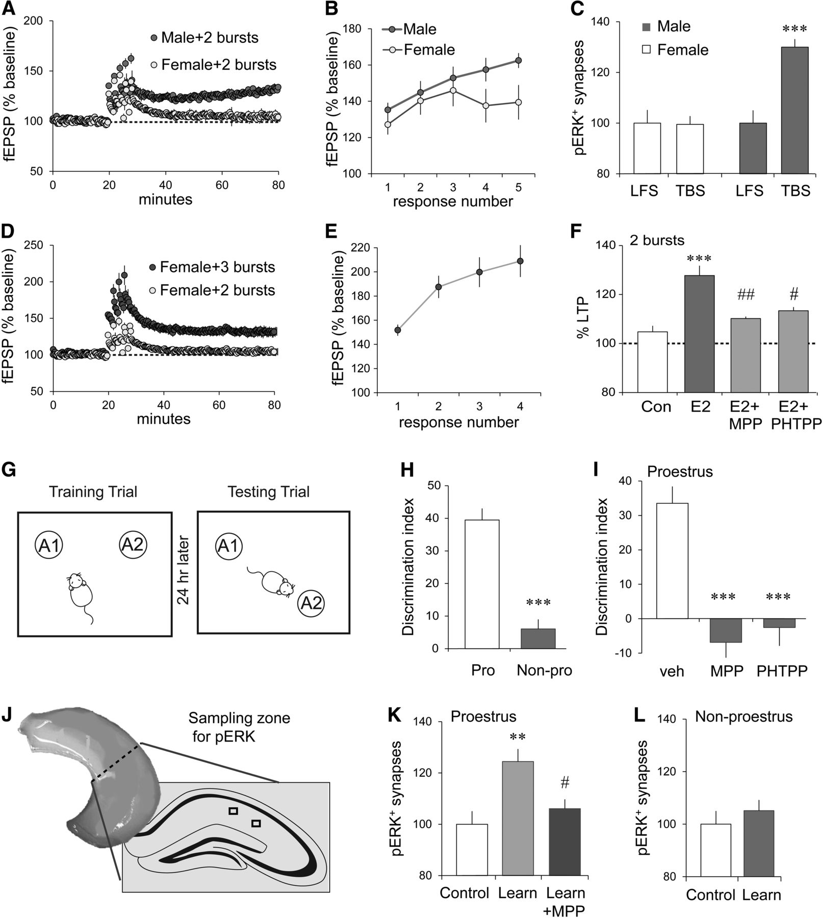Memory Related Synaptic Plasticity Is Sexually Dimorphic In Rodent Lm 317 T Keywords Suggestions Long Tail Download Figure