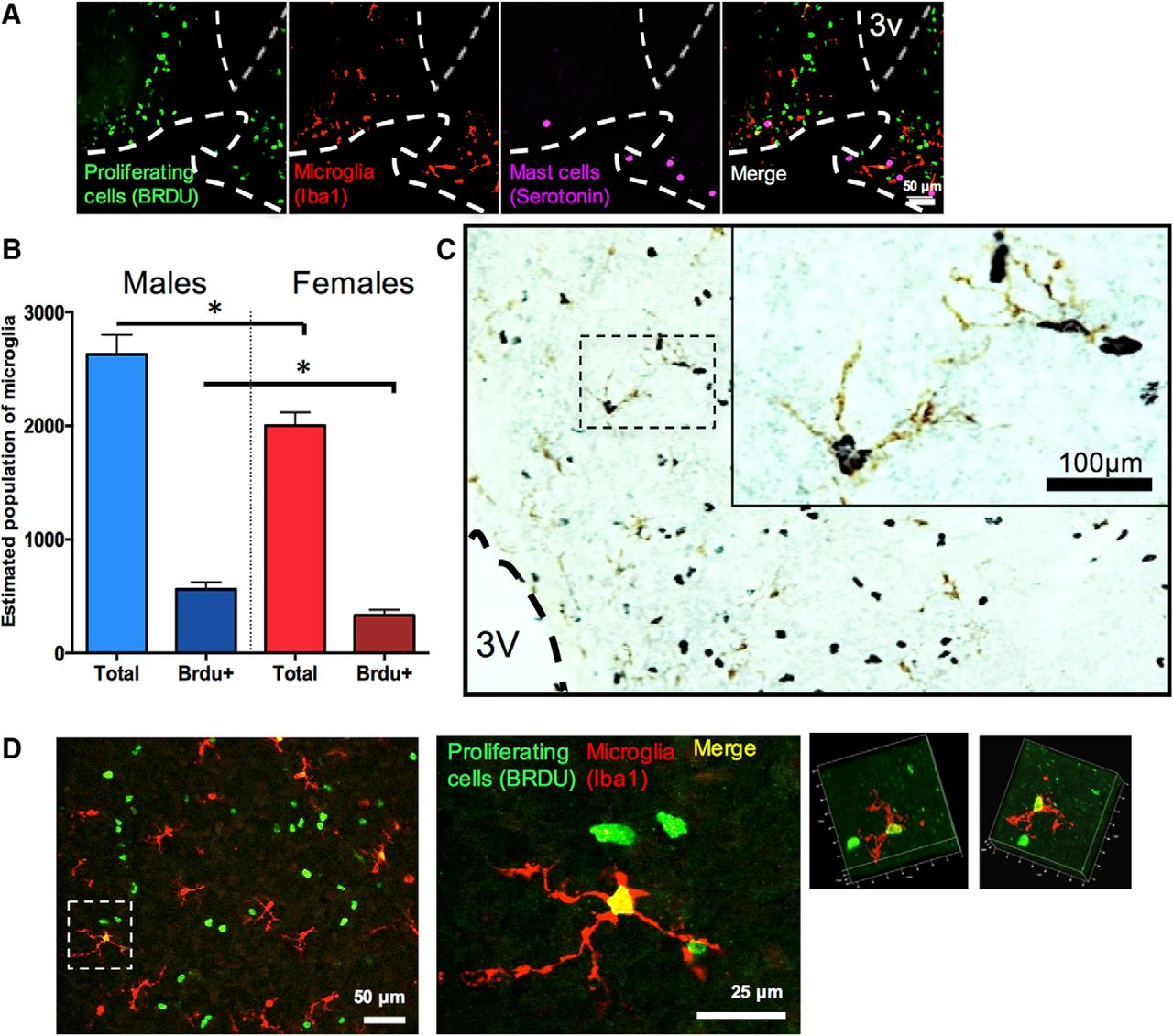 Mast Cells in the Developing Brain Determine Adult Sexual Behavior