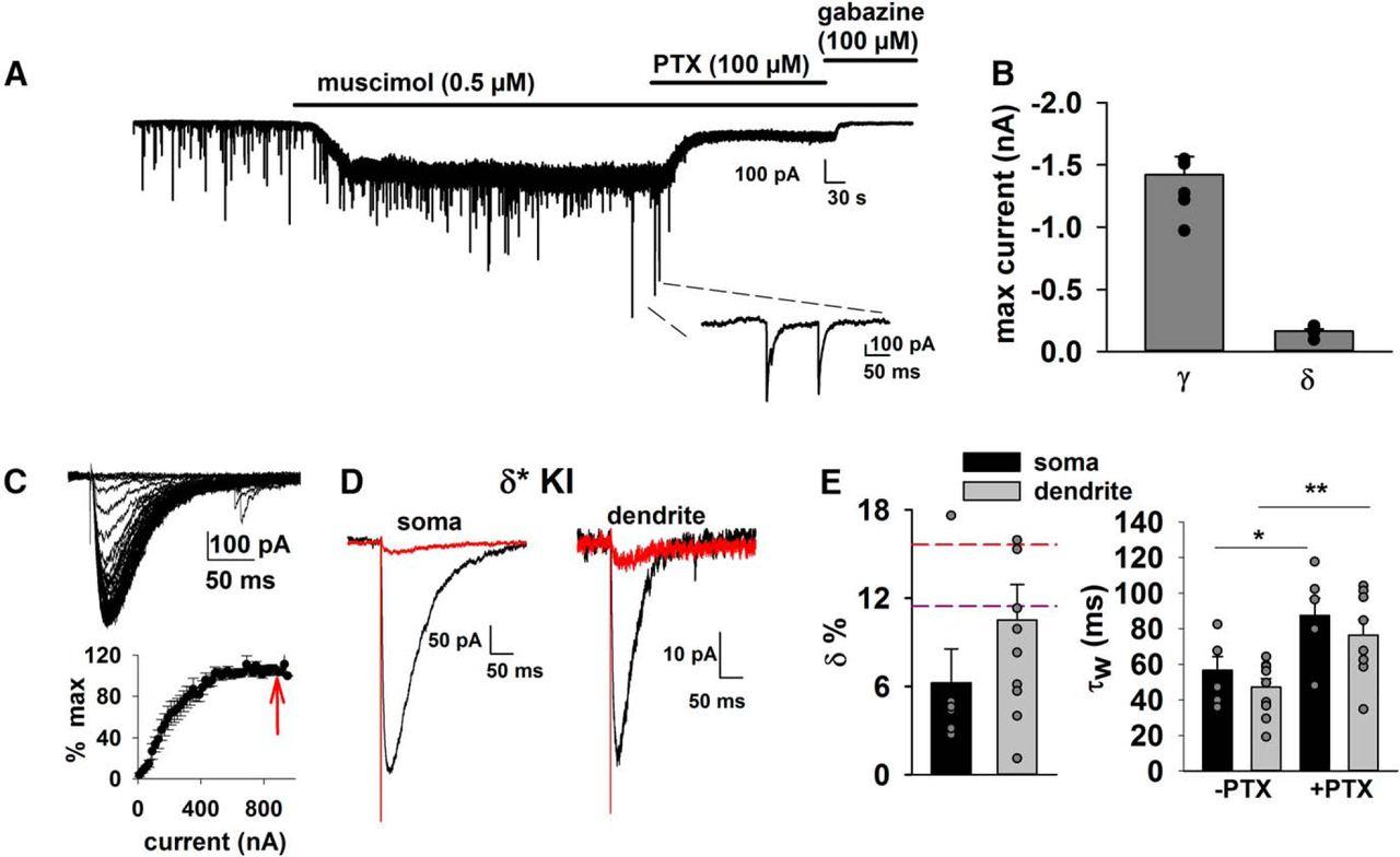 Chemogenetic Isolation Reveals Synaptic Contribution Of Gabaa Cooper Wiring Diagrams Mini Diagram Jensen Download Figure