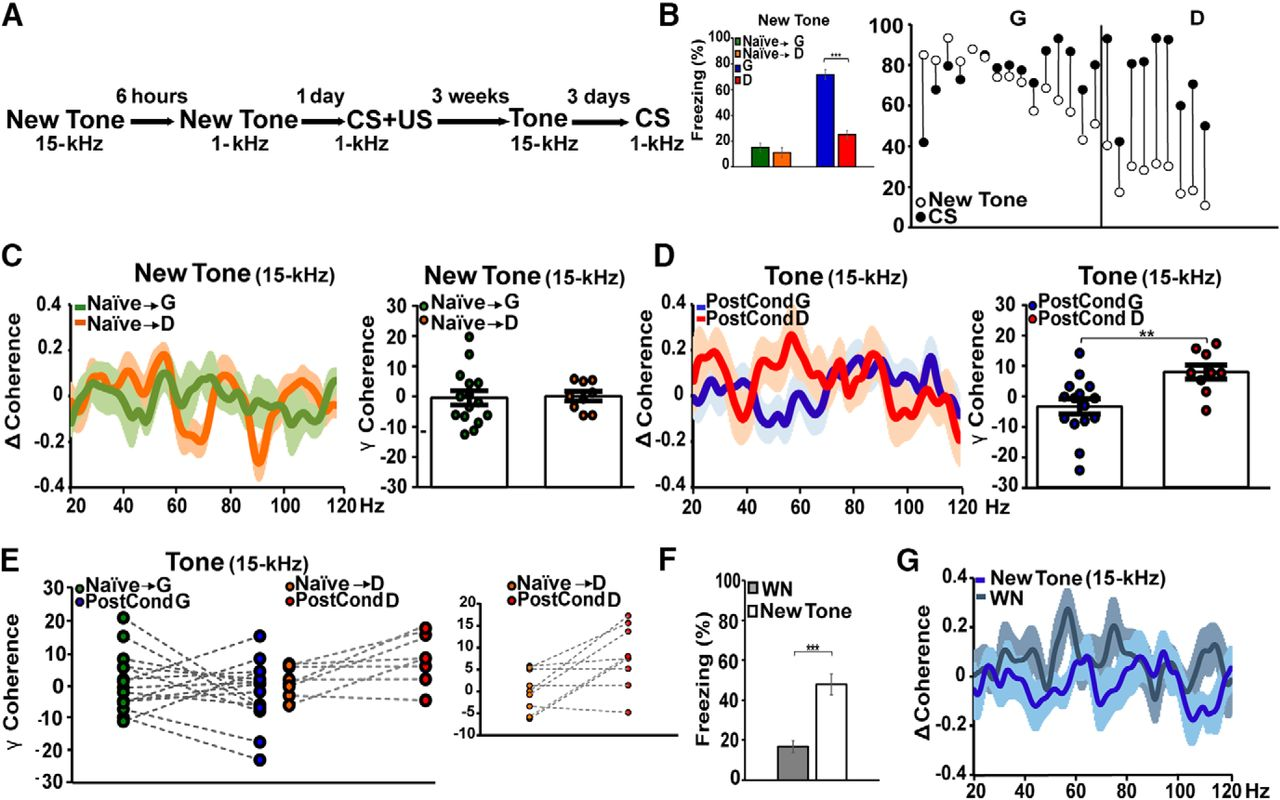 Coherent Activity Between The Prelimbic And Auditory Cortex In 4 Channel Speaker Wiring Diagram Ricerche Correlate A Download Figure