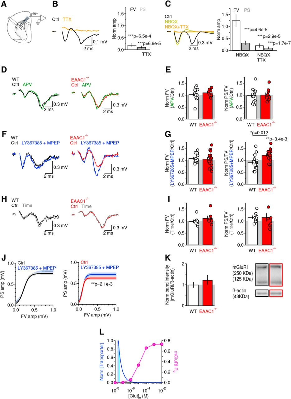 Neuronal Glutamate Transporters Control Dopaminergic Signaling And Grado Gold Wiring Diagram Download Figure