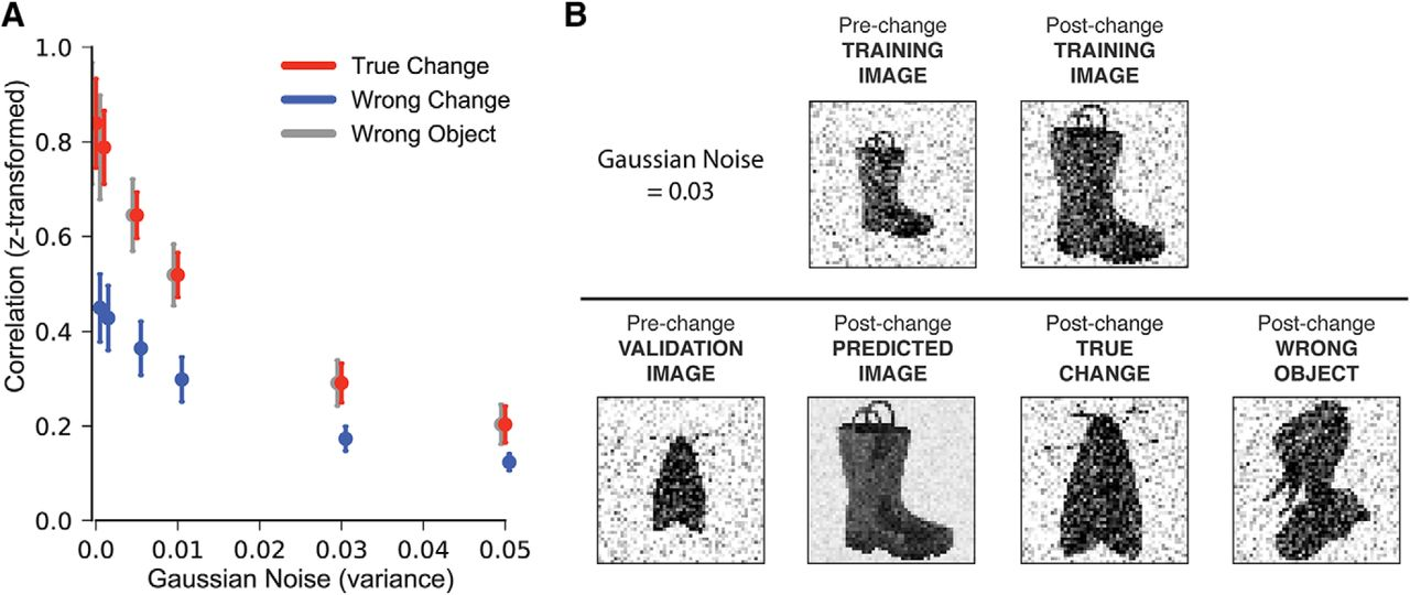 General Transformations of Object Representations in Human Visual