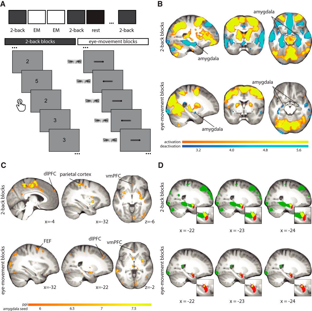 Eye-Movement Intervention Enhances Extinction via Amygdala