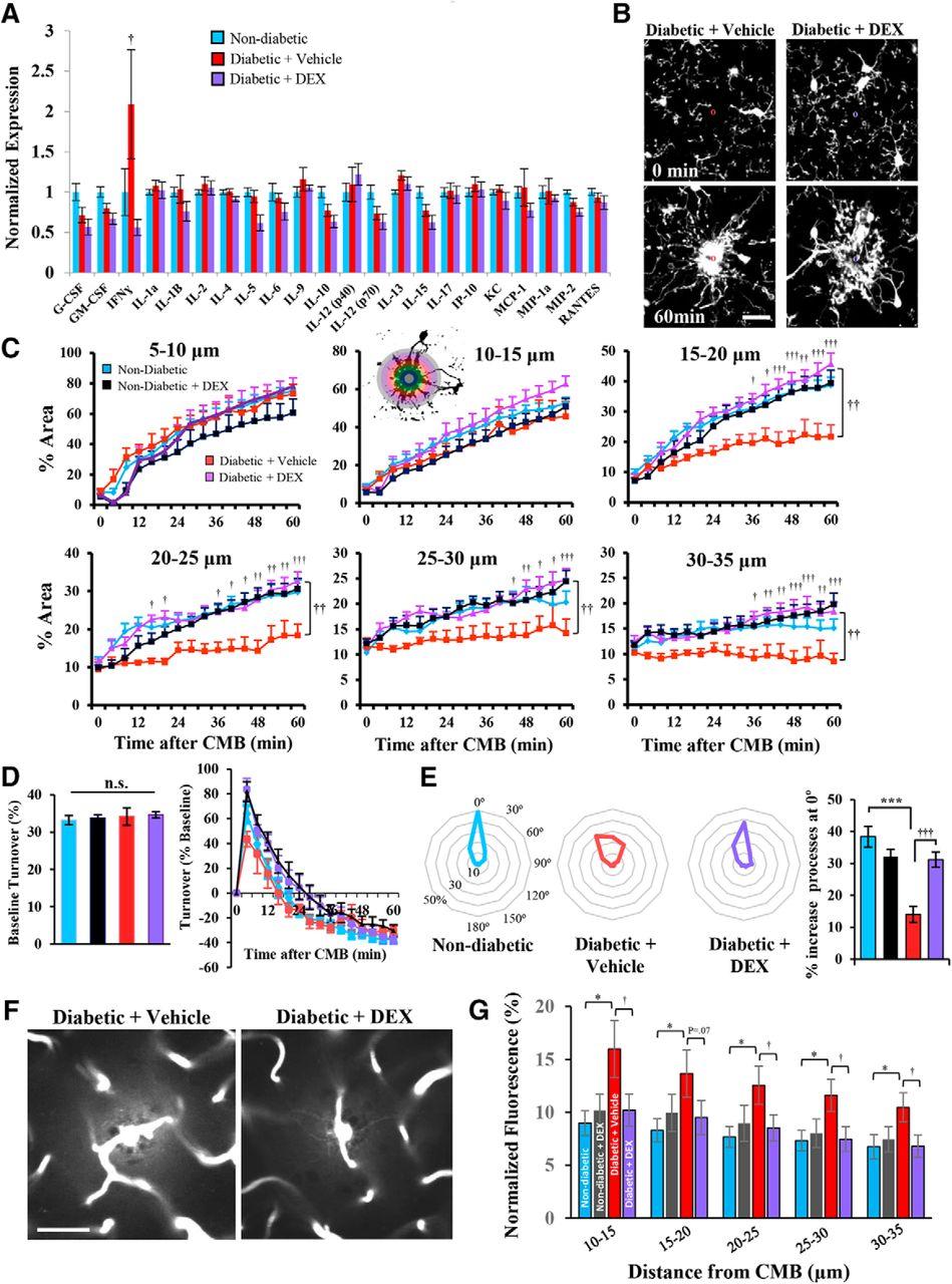 Suppressing Interferon-γ Stimulates Microglial Responses and