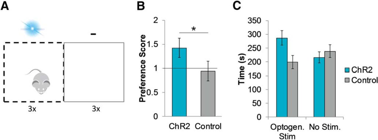 The Role of Cholinergic Midbrain Neurons in Startle and