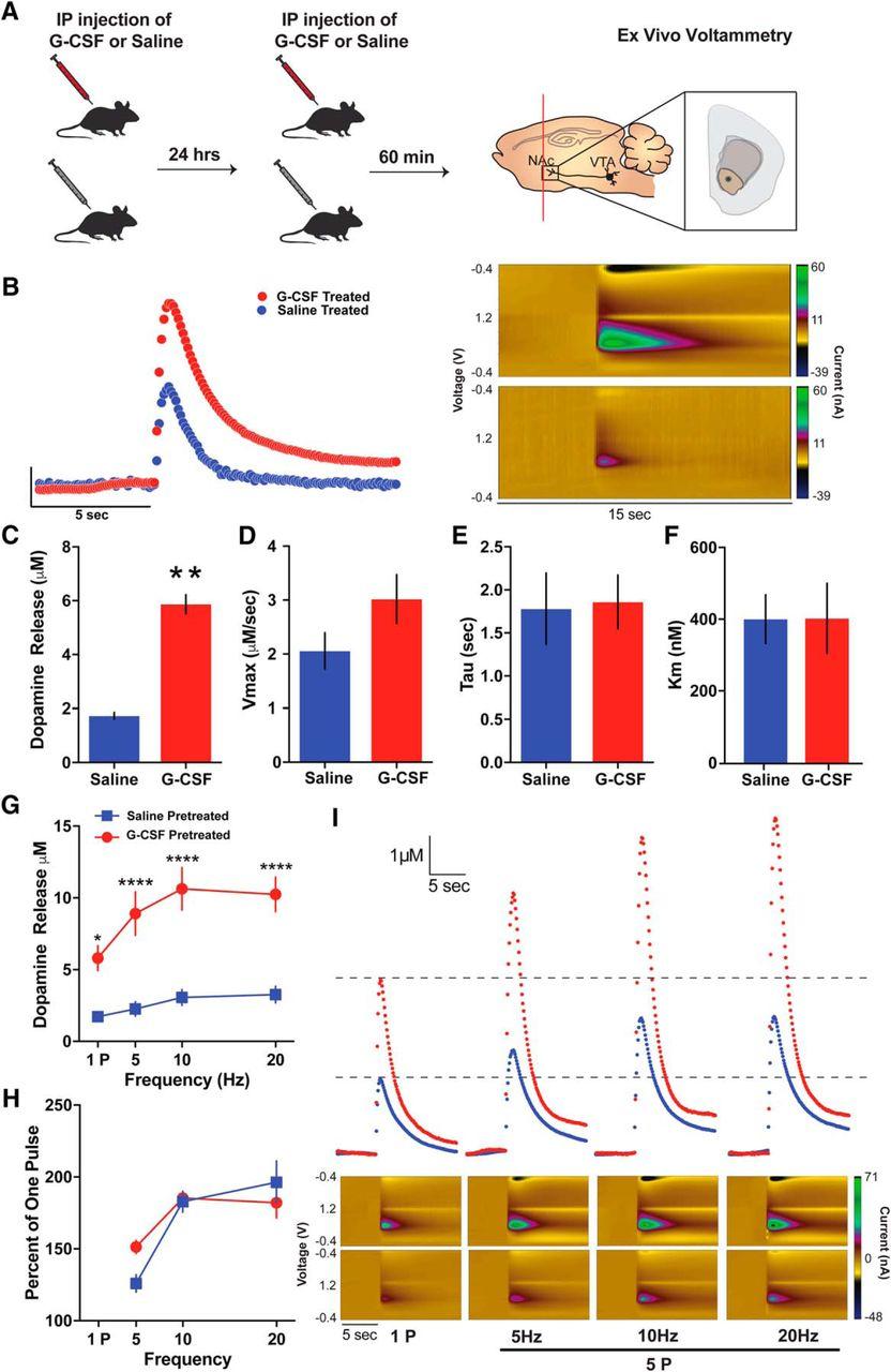 Granulocyte Colony Stimulating Factor Enhances Reward Learning
