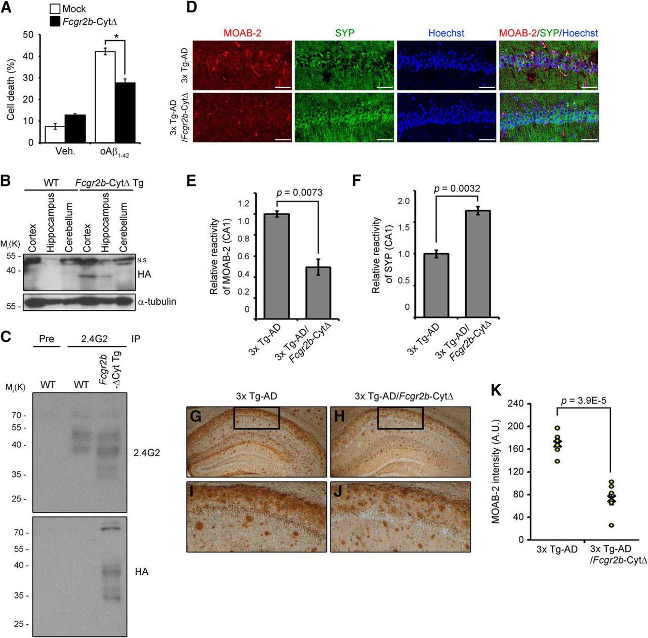 TOM1 Regulates Neuronal Accumulation of Amyloid-β Oligomers by