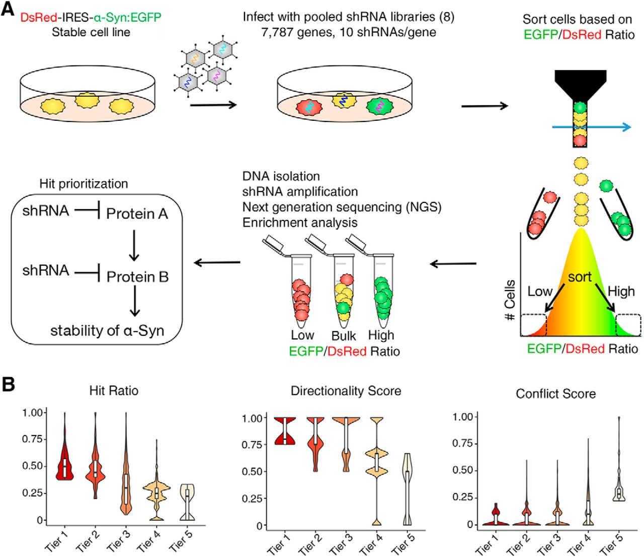 A Druggable Genome Screen Identifies Modifiers of α