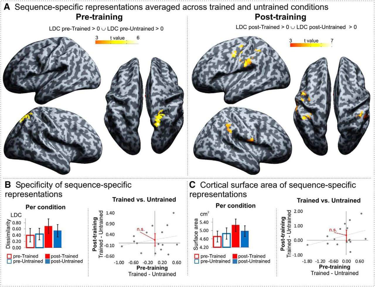 Observing Action Sequences Elicits Sequence-Specific Neural