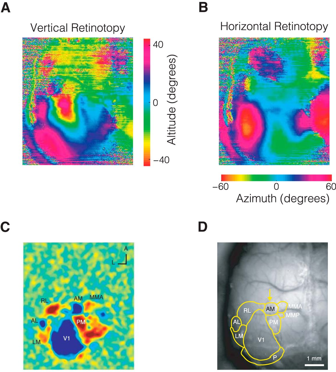Visual Evidence Accumulation Guides Decision-Making in Unrestrained