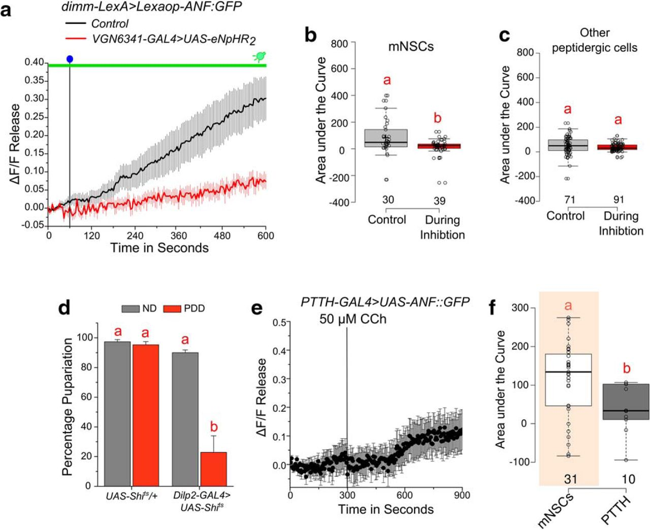 A Multicomponent Neuronal Response Encodes the Larval Decision to