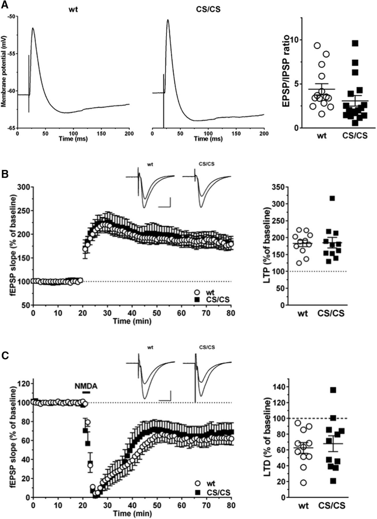 Deficiency of AMPAR–Palmitoylation Aggravates Seizure