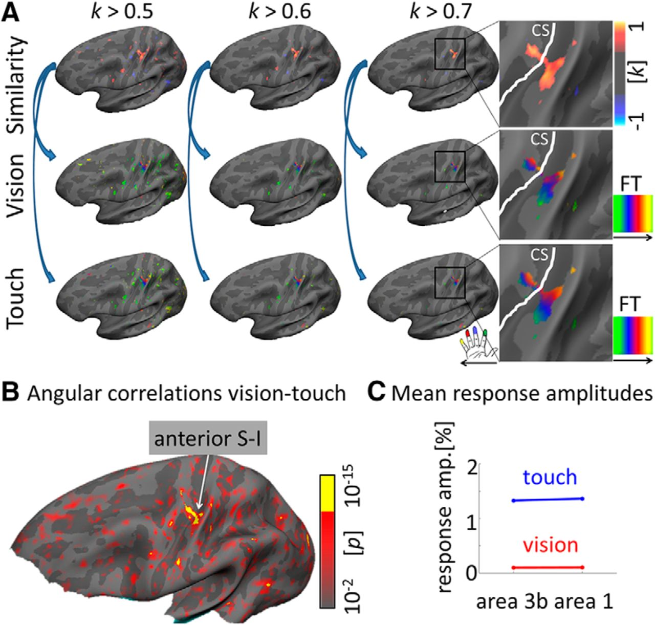 Visually-Driven Maps in Area 3b | Journal of Neuroscience