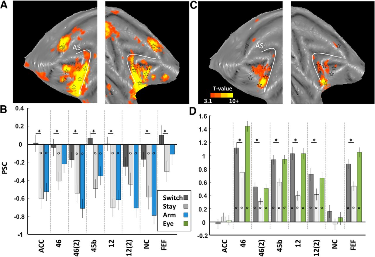 Functional MRI in Macaque Monkeys during Task Switching | Journal of