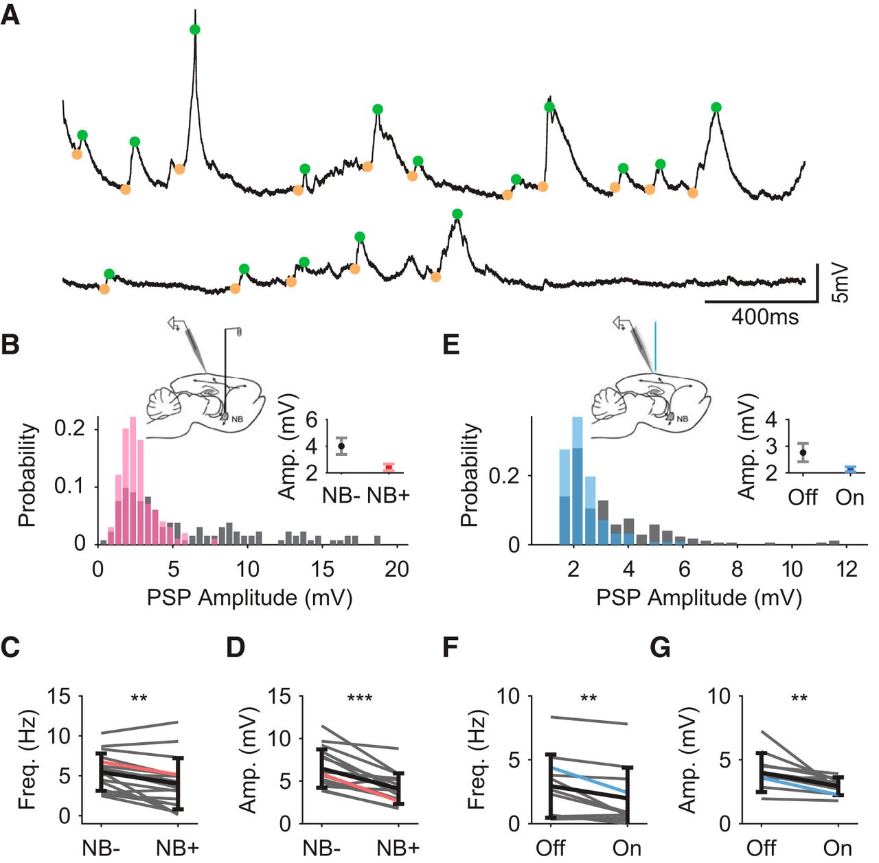 Membrane Potential Correlates of Network Decorrelation and