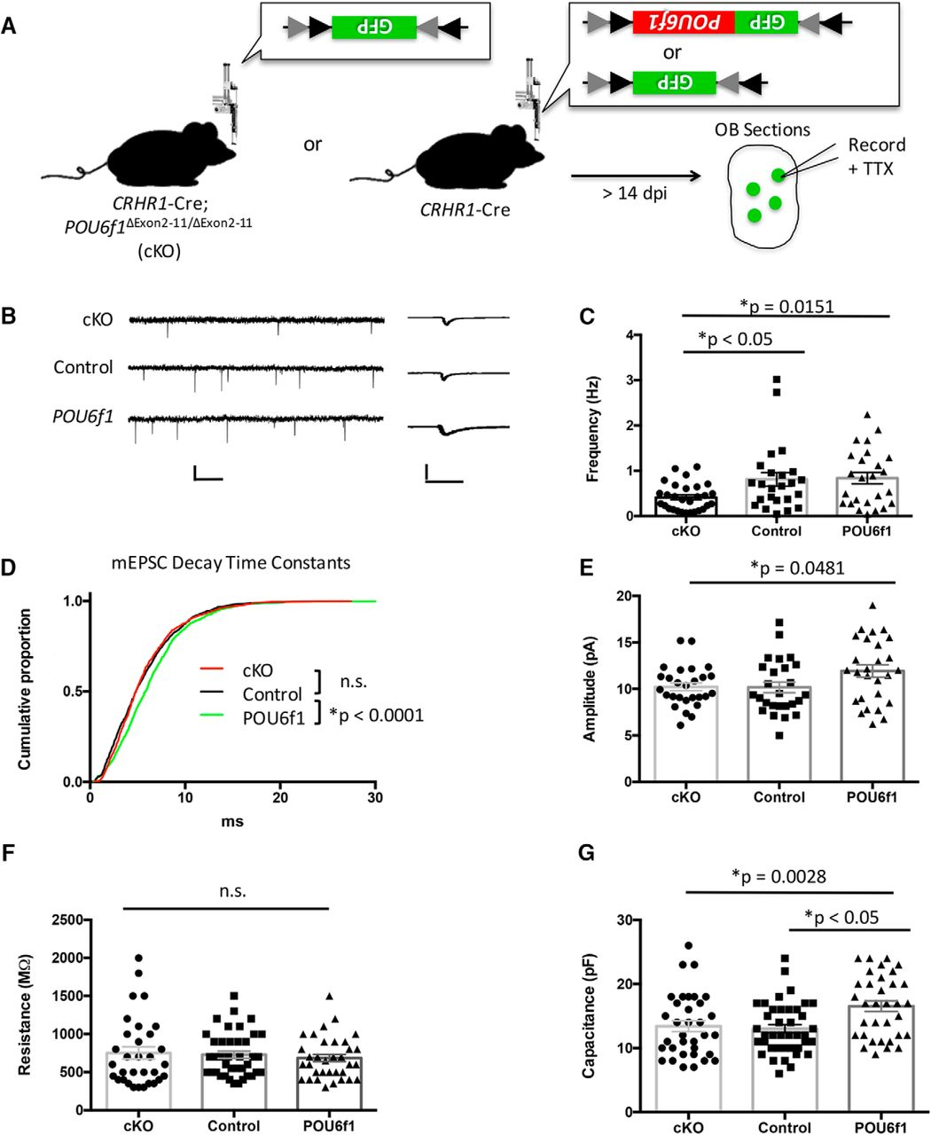 Pou6f1 Mediates Neuropeptide Dependent Plasticity In The Adult Brain Looked Up Wiring Diagram For Flex Reverse Camera Download Figure